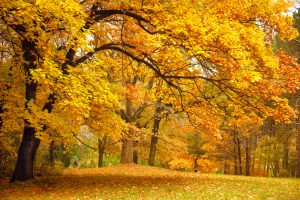 Keeping Your Office Clean During the Fall