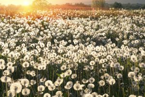 Eliminating Pollen